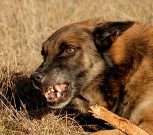 dog park immunity